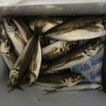 私は魚釣りをして体調を崩し、夫の事はノーマークでロードスターも何もわかりません!!