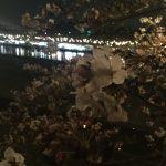 岡崎城付近でお花見した話(どうでもいい話です)