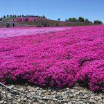 デミオで茶臼山高原_芝桜まつりへ リベンジ ドライブに行く