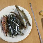 尾鷲漁港と紀伊長島漁港で春に釣りをして、まぁまぁ釣れたと自己満足した話